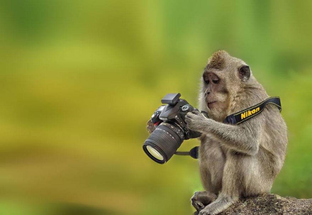 Mono fotógrafo selfie